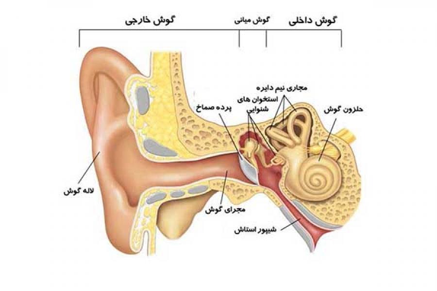 ساختار سیستم شنوایی (گوش) - HSEKALA